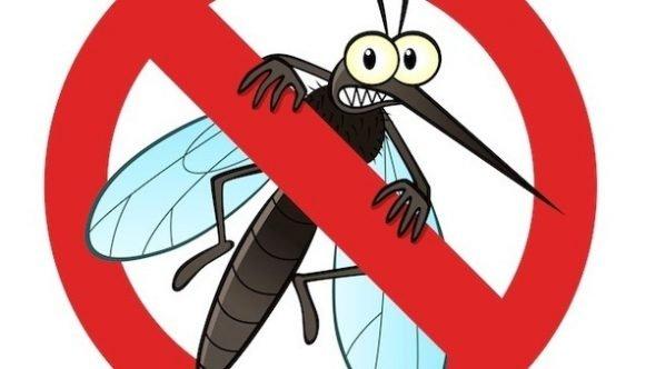 Remedii naturale împotriva țânțarilor care funcționează cu adevărat